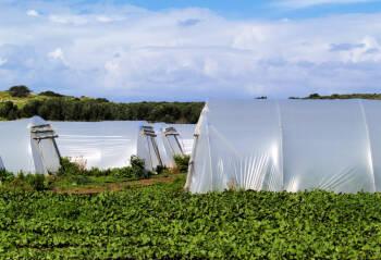 Las plantas del GRUPO INDUSTRIAL TPM continuan paradas, a la espera de la compra por parte de la correduría de seguros MORERA & VALLEJO
