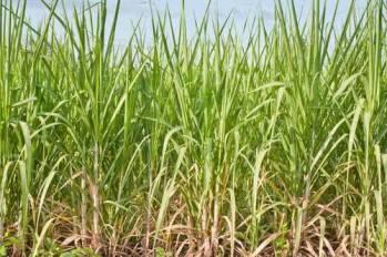 BRASKEM proyecta iniciar la producción de polietileno de baja densidad renovable
